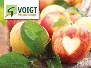 Obst-Fest mit neuer Ernte @ Voigt Pflanzen GmbH