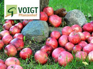 Apfelernte @ Voigt Pflanzenhof